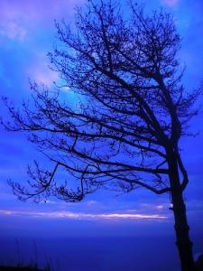 albero-su-cielo-blu